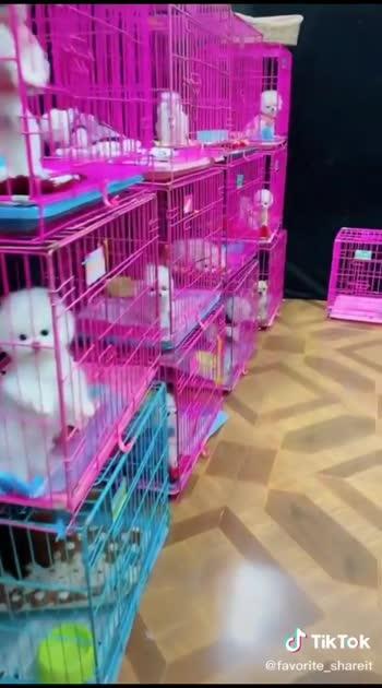 #cuteness-overloaded #cute_puppy #puppylove #puppylover #puppylife #puppy #cutevideo #doglover #doglove