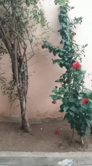 #flowerslovers  #planttrees  #flowermagic