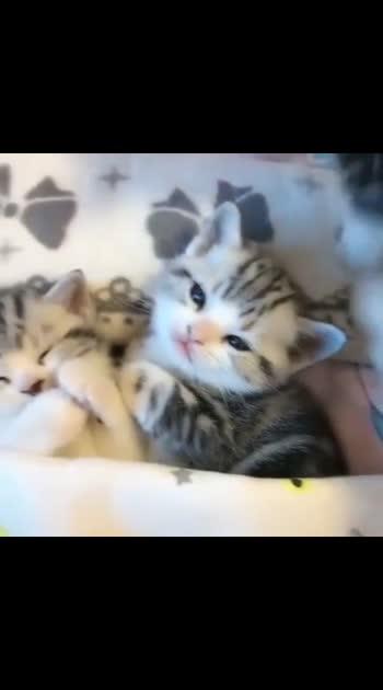# adorable kittens