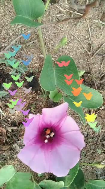 #tamillovestatus #flowerslovers #flowermagic