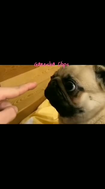 Dog Funny Video #very-funny #very-funny-comedy-video #funnyvideo #doglove