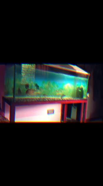 🎏 fishtank