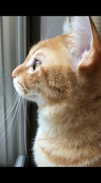 Lovely Kitten #adorable #cute #kitten