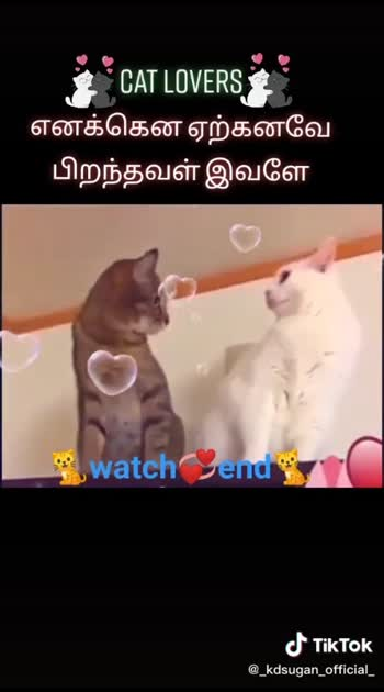 cat reactions love...😍😂😂😂🤗🤗 cat lovers..😍😘#animelover #petanimals #catlove_baby