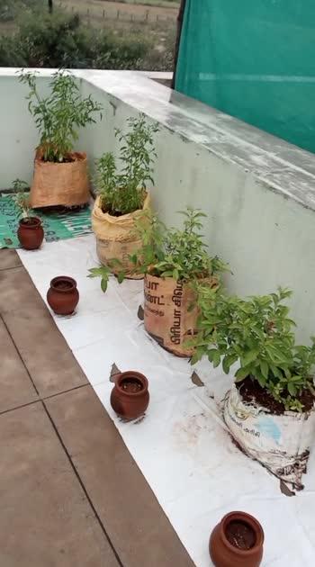 #garden #gardening #gardenview