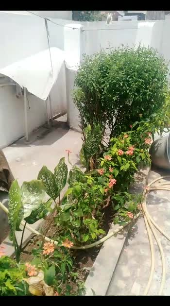 #roposostar #gardening #garden_explorers #roposocontest #roposo-masti