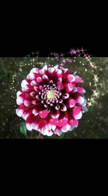 #flowermagic