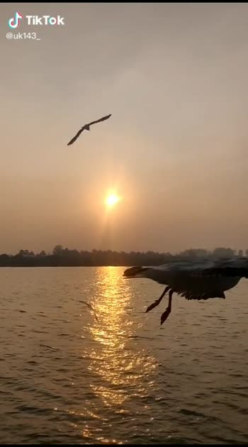 nature vibes #nature #ropososlowmotion #roposo #roposolike #comeback #sorry #slowmo #birds #river #sharethevideo #viralvideo #like #ropso-romance #tone agr yeh video hit Hui next video m isse acchi  laaunga I promise #support #needsupport