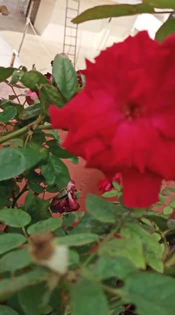 #beautifuldestinations flowers