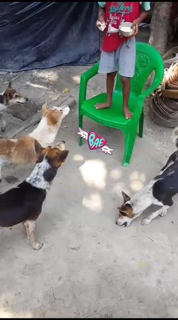 #doglover #