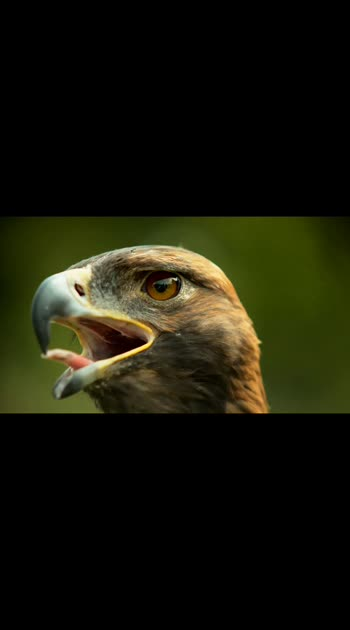 This is how an eagle blinks, God's creation, amazing 🤔