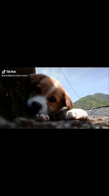 #photography #doglover #animallover