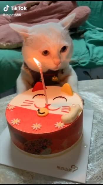 #cat #catslover #birthday #birthdayboy 🤣🤣