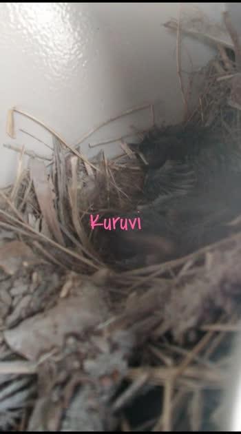 #kuruvi