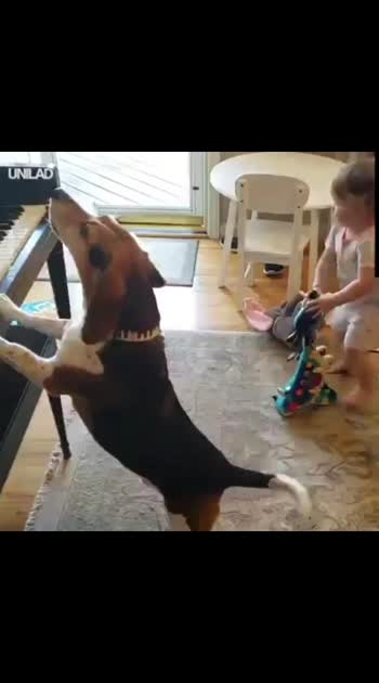 musician dog