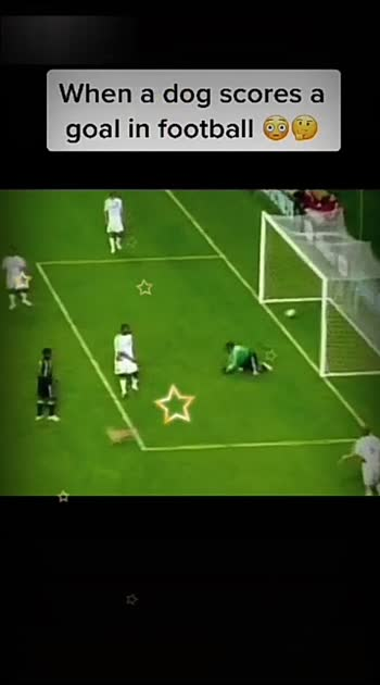 what happened when the dog hit a goal in FIFA World Cup!! #entertainment #commentbelow
