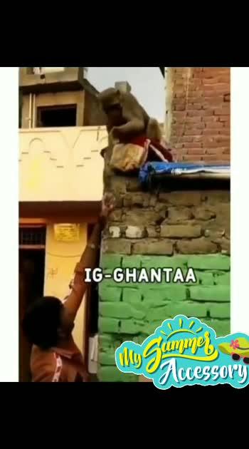 #monkey funnyclip