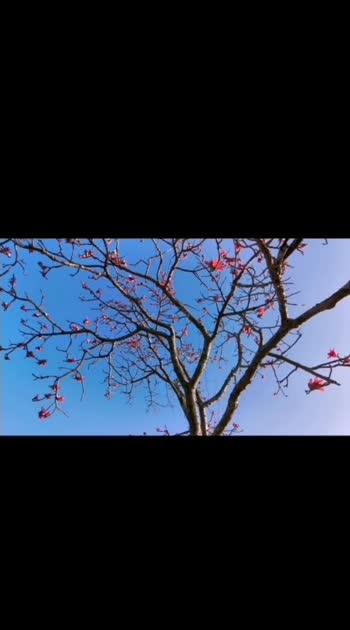 #pawnalake #lakesideview #pinkflowers #traveldiaries #pawnalakecamping #maharashtra #india   Music: Mornings Musician: Jef