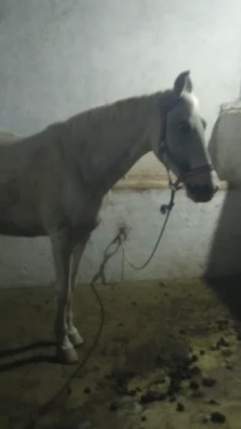 #horsepower #horselover #horsestagram