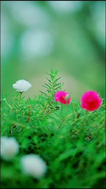 Nature Photography #naturephotography #photooftheday #photography #photoshoot #photographyeveryday #photoeveryday #risingstar #roposostarschannel #filmistaanchannel #beatschannel