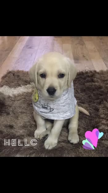 Puppy Love.. ❤#roposo #roposostar #puppylover #puppylife #puppylove 😍🥰😘