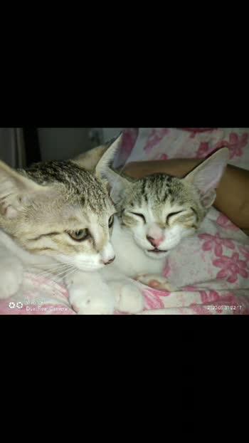 #kitten #kittenlove