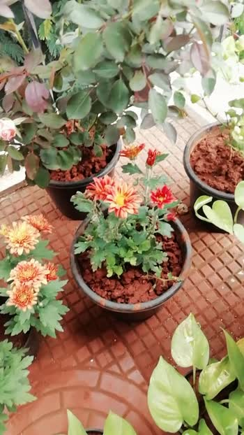 Blooms like flower😍♥️