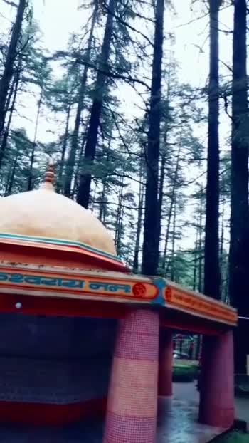 Watch the branches of tree as Trishul #Symbolofshiva #Tarkeshwar_Mahadev_Temple #Garhwal