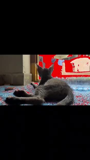 #catsofinstagram #cats #stray