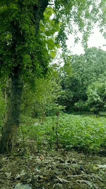 my garden #gogreen #yogainspiration #yoga #yogaposes