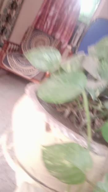 my1st video#naturalskincare #maniiplant #likeforlike