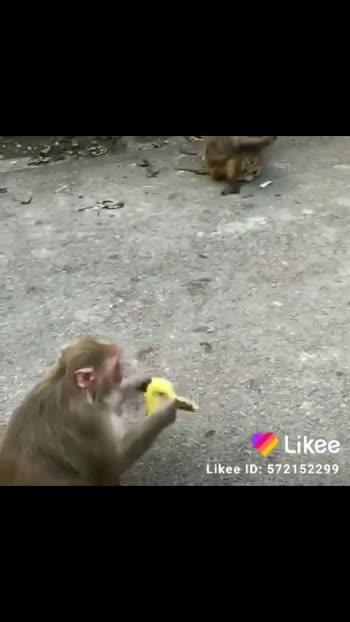 Feeding Furry Babies