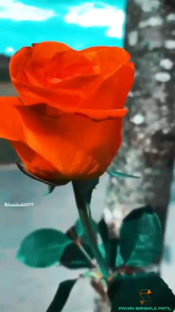 New On Roposo Plz Follow For this type of Videos #nature #naturelover #naturalbeauty #natural #naturepgotography #naturelovers #naturelove #naturalview_lover #natureswonder