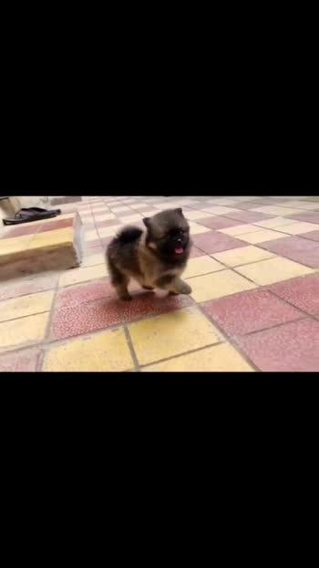 #puppylover