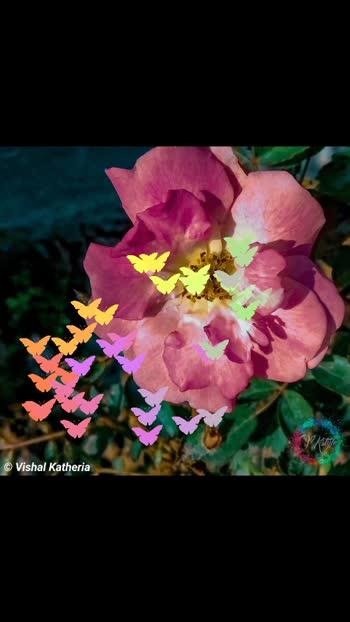 #flowerslovers #floweroftheday #flower #flowersofinstagram #flowermagic #naturepics #naturelover #naturepgotography