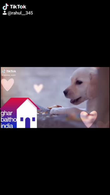 #doglover#