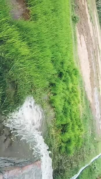 #farming #india #indiawins #ladhak #punjabi