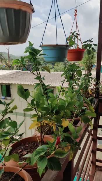 #my teres garden#garden_explorers #allplants#flowers #plants #mygardensflower