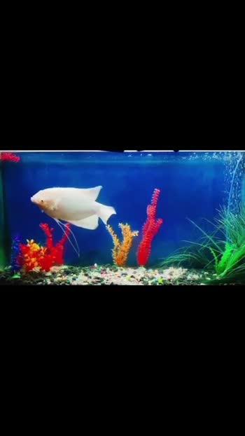 MY FISHTANK #fish #viralvideo #silent_love