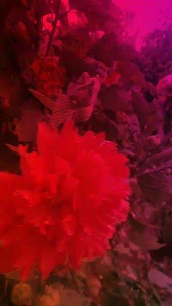 #flowers #natural #flowerslovers #flowermagic #floweroftheday #naturepgotography #nature #music #music_video #roposo-beats #roposostar #roposo #roposocamera
