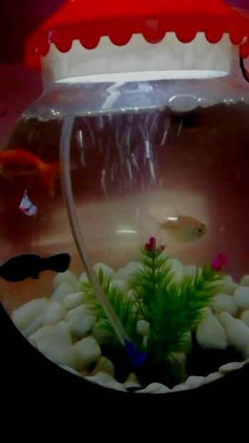 #aquarium #aquariumfish #love_moments