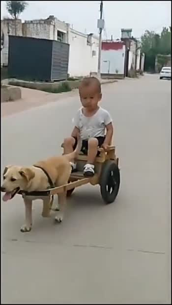 #doglover