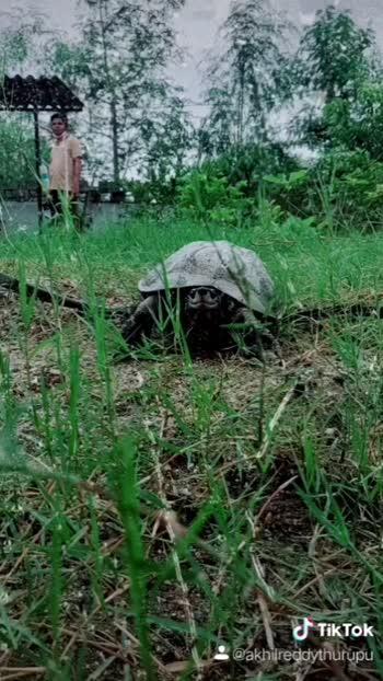#tortoise #petlovers #wildlifelover #wildlifephotography