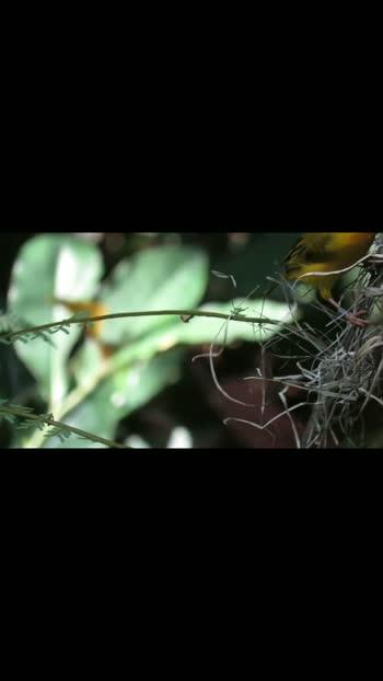 #naturevideos#viralvideo#shareandcare like and share#naturepgotography #nature_lovers #beautifulbirds#landscapephotography