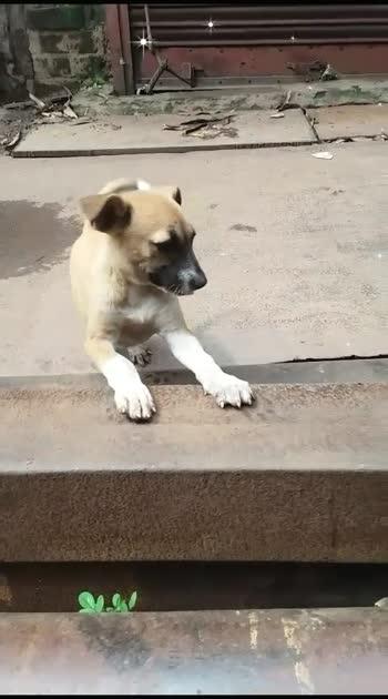 #cute puppy.......puppy lovers