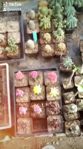 #cactus #naturelove