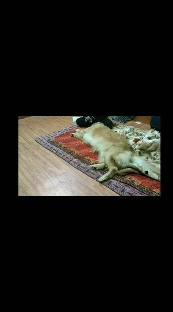 Treatzzzz Hooman, I want Treatzzz 🤤🤤🤤  #GoldenRetriever #Furry #trending