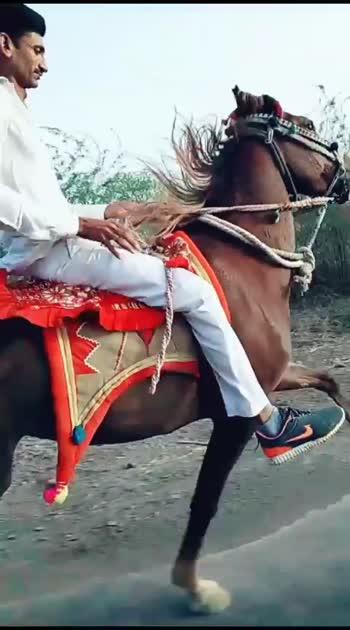 ☺ for you👑🎠#horsh#horsepower #horselover #kathiyawadi_horse #surajdada #horsesofinstagram