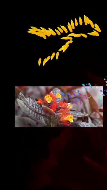 ಓಓ ಶ್ವೇತಾಂಬರಿ ನೀನು ಬಾರದೆ..... One of my favourite song #rajeshkrishnansir #singer #pscreations1 #followmeinstagram #SUBSCRIBE_CHANNEL in YouTube for more funny videos nd more editing tool adda insta id - @pavanjosh421.official YouTube - PS CREATIONS (I am villain what's app status) 🙏🙏🙏🙏🙏