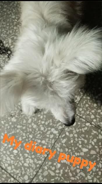 #my diary puppy#puppy